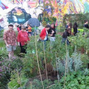 Jardin partagé urbain - Champigny en transition